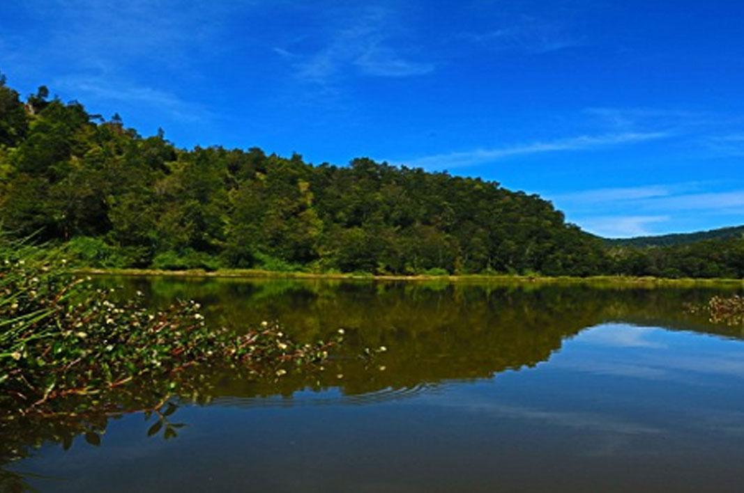 Bukit Seroja Telaga Menjer Dieng Wonosobo Lokasi Harga Tiket Pengilon