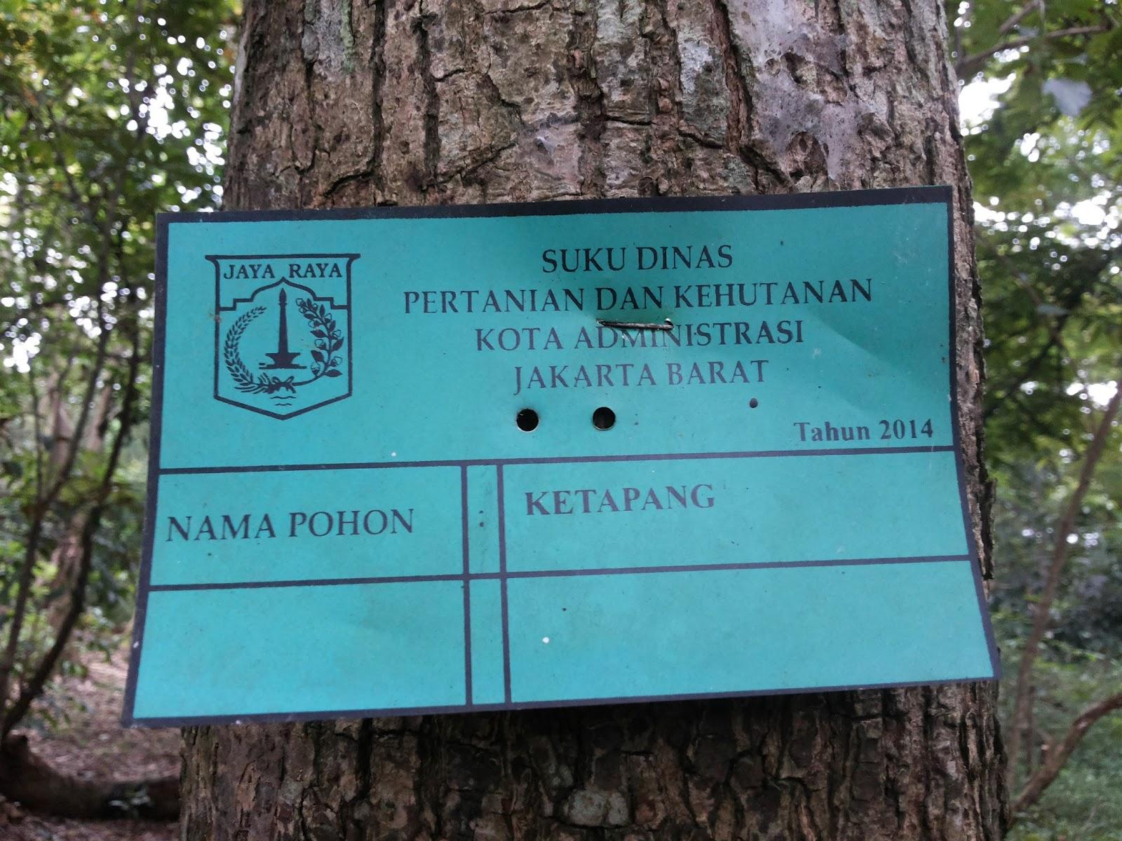 Mandi Oksigen Hutan Kota Srengseng Majalah Betawi Alamat Lengkap Terletak