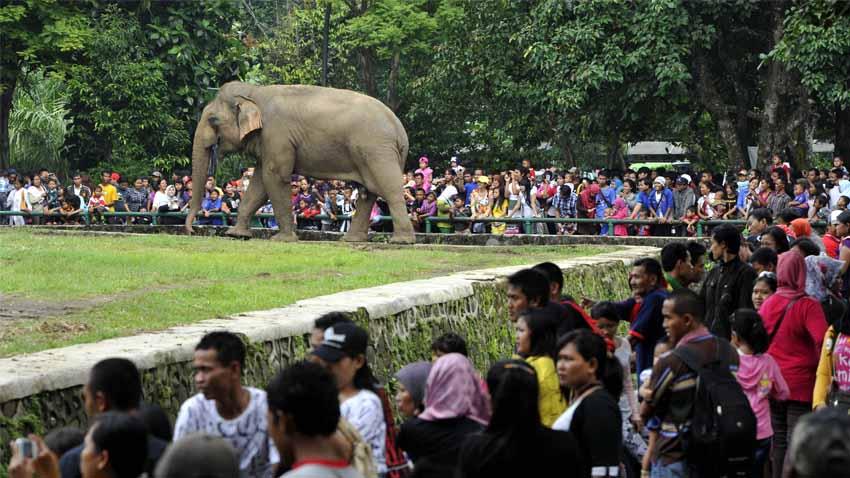 1 Januari 2018 Kebun Binatang Ragunan Favorit Dikunjungi Ruas Jalan
