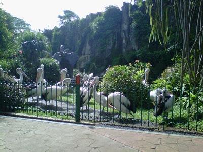 10 Gambar Kebun Binatang Ragunan Jakarta Harga Tiket Masuk Fasilitas