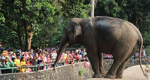 100 Tempat Wisata Jakarta Terbaru Bagus Hits Kebun Binatang Ragunan