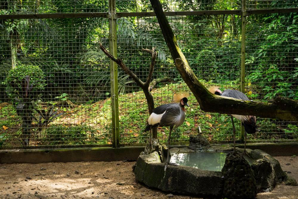20 Tempat Wisata Jakarta Selatan Wajib Dikunjungi Waktu Kebun Binatang