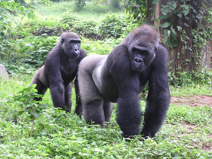 2016 08 07 Wisata Indonesia Dunia Kebun Binatang Ragunan Pertama