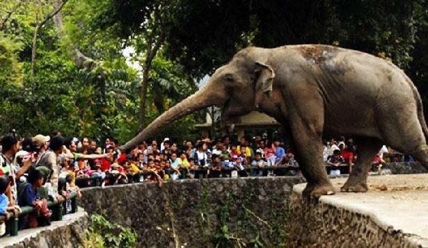 7 Tempat Wisata Alam Jakarta Wajib Dikunjungi Wisatawan Kebun Binatang