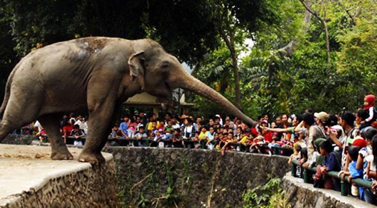 Berwisata Kebun Binatang Ragunan Berita Kawasan Kota Administrasi Jakarta Selatan