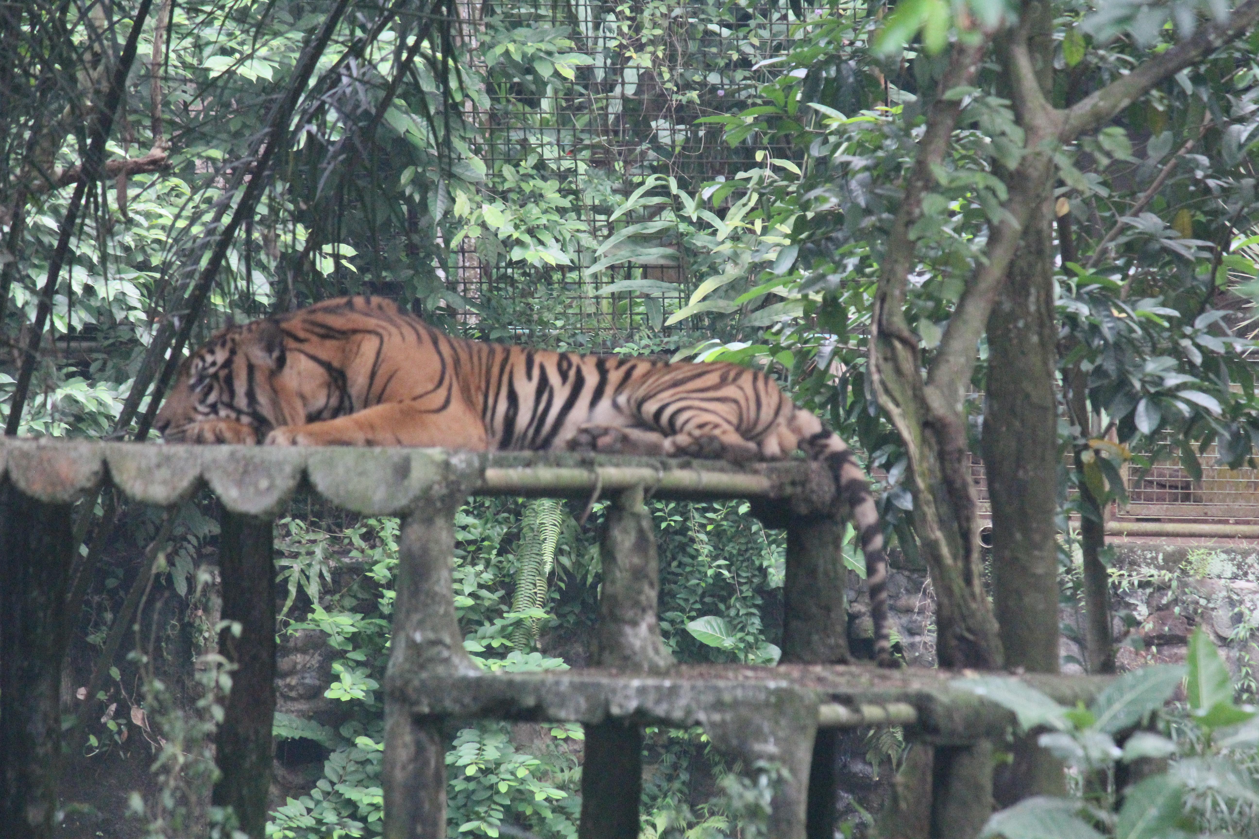 Berwisata Kebun Binatang Ragunan Jakarta Selatan Bagus Catur Prasetyo Foto