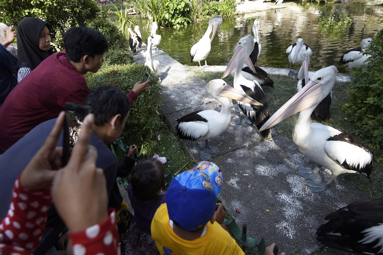 Libur Lebaran Wisata Kebun Binatang Ragunan Ramai Dikunjungi Wisatawan Mengamati