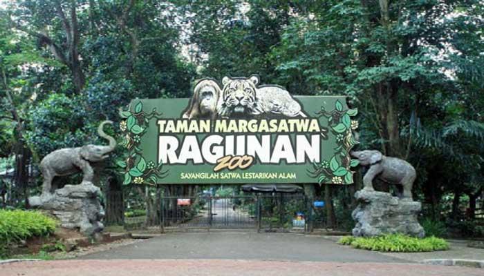 Menelusuri Kebun Binatang Ragunan Jakarta Wisata Blog Kota Administrasi Selatan