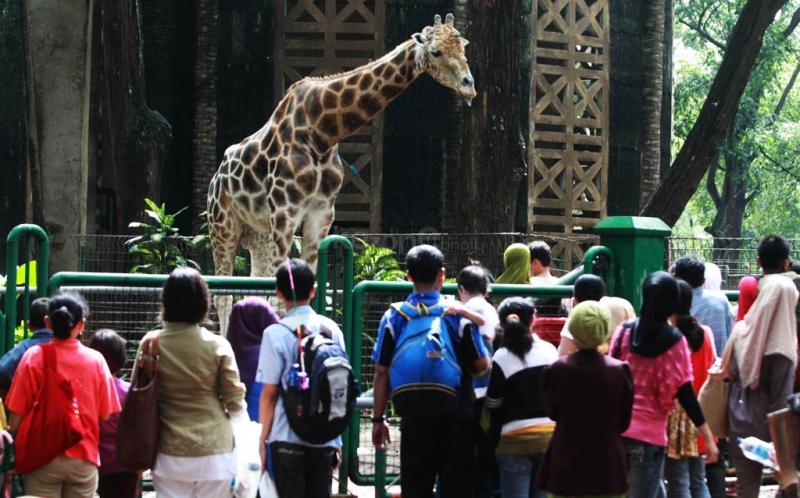 Objek Wisata Jakarta Kebun Binatang Ragunan Berbagai Kota Administrasi Selatan