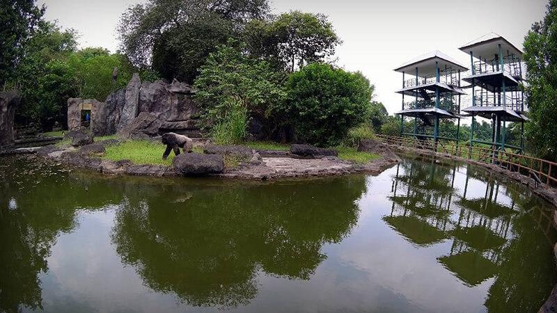 Panduan Wisata Jakarta Sekitarnya Pikniek Tempat Kebun Binatang Ragunan Kota