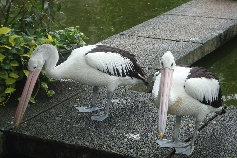 Ragunan Zoo Jakarta Kebun Binatang Kota Administrasi Selatan