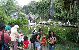 Ragunan Zoo Wikipedia Popular Weekend Destination Jakarta Families Kebun Binatang