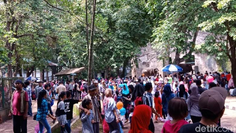 Ribu Pengunjung Padati Ragunan Siang 84 Kebun Binatang Kota Administrasi