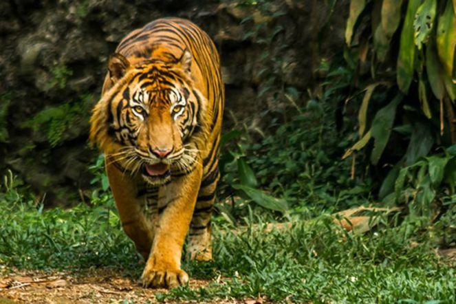 Sejarah Berdirinya Kebun Binatang Ragunan Money Id Ragunanzoo Jakarta Kota