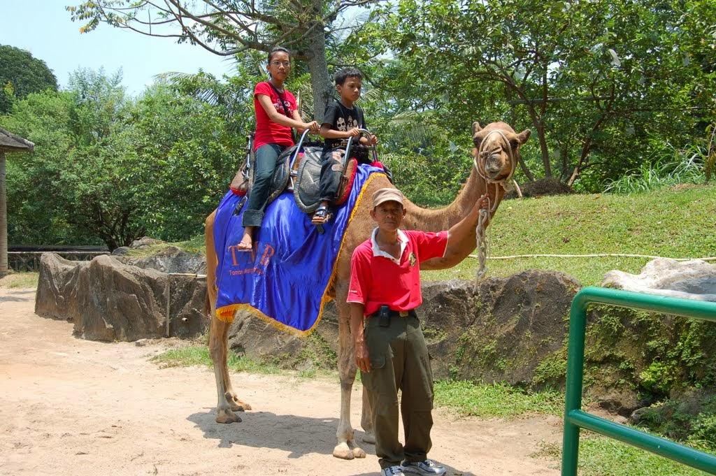 Sobatpetualang Naik Unta Kebun Binatang Ragunan Jakarta Kota Administrasi Selatan