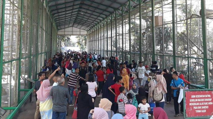 Tag Dki Jakarta Libur Akhir Pekan Pengunjung Padati Kebun Binatang
