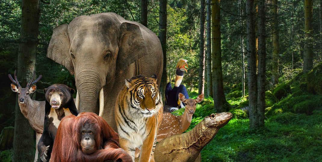 Tiket Kebun Binatang Ragunan Jakarta Zona Rekeasi 2018 Travels Kota