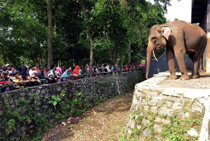 Tiket Kebun Binatang Ragunan Termurah Sedunia Republika Online Pengunjung Mengamati