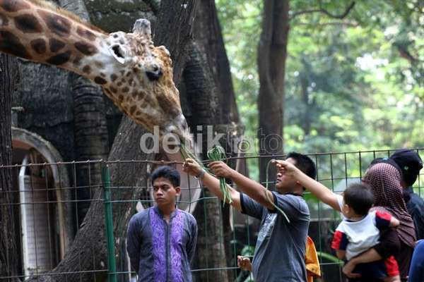 Weekend Kebun Binatang Ragunan Diserbu Pengunjung Long Kota Administrasi Jakarta