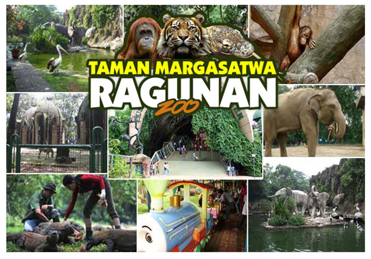 Wisata Jakarta Wonderful Indonesia Time Knowledge Kebun Binatang Ragunan Sebuah