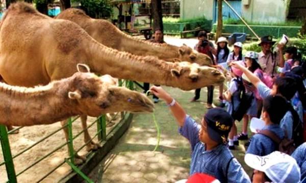Wisata Kebun Binatang Ragunan Jakarta Peta Lokasi Fasilitas Kebon Berlokasi