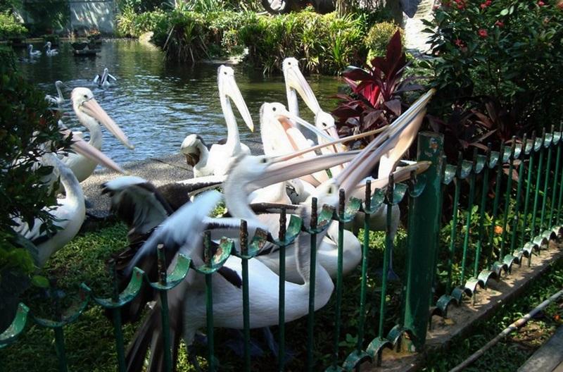 Wisata Keluarga Jakarta Selatan Informasi Tempat Indonesia Spesies Burung Kebun