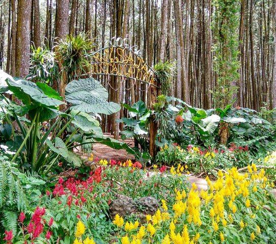 10 Gambar Hutan Pinus Imogiri Mangunan Bantul Jogja Harga Tiket