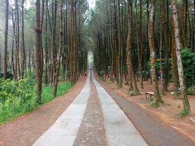 10 Gambar Top Selfie Hutan Pinus Kragilan Magelang Alamat Wisata
