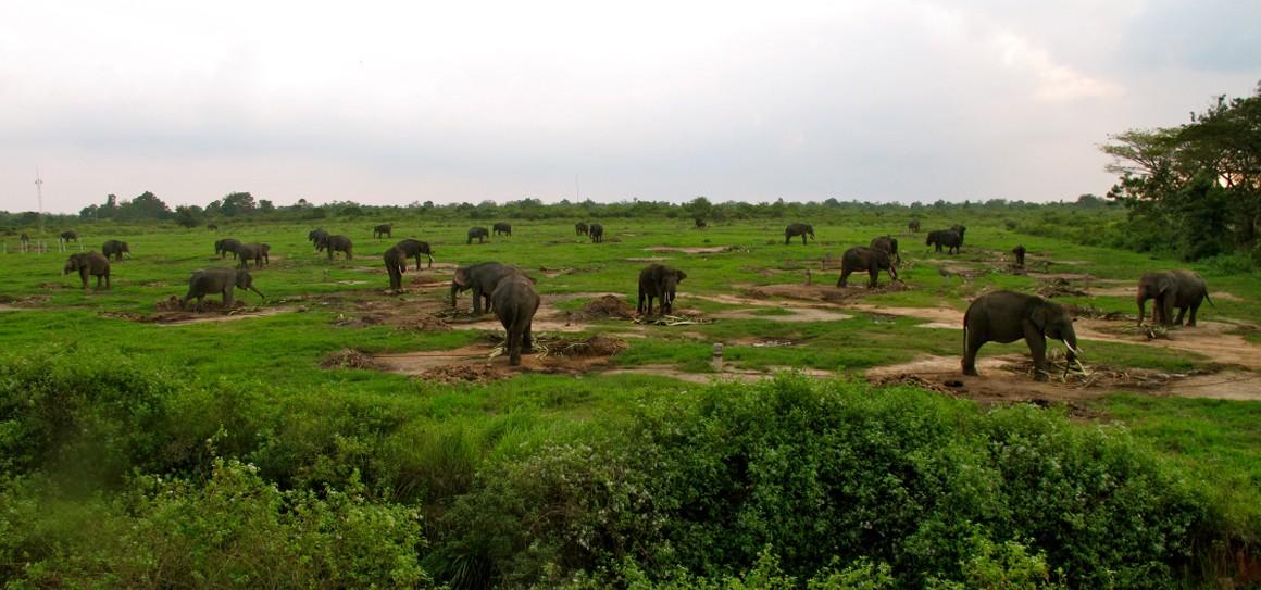 10 Taman Nasional Indonesia Wajib Kamu Datangi Backpacker Foto Cepamagz