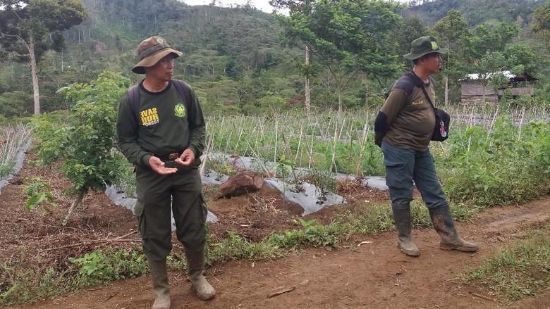 6 Ribu Hektare Taman Nasional Kerinci Seblat Dirambah Warga Lahan