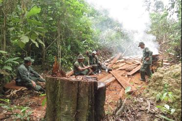 Batang Kayu Ulin Hasil Pembalakan Liar Ditemukan Taman Nasional Kutai