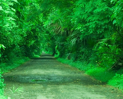Biaya Masuk Taman Nasional Baluran Banyuwangi Penginapan Hutan Evergreen Foto