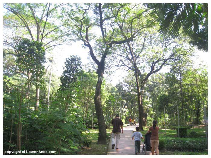 Hutan Kota Tebet Kids Holiday Spots Liburan Anak Informasi Taman