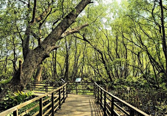 Interpreter System Taman Jakarta 6 Hutan Terletak Kawasan Wisata Alam