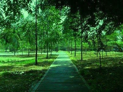 Life Die Jakarta Taman Hutan Kota Tebet Menikmati Selatan Administrasi