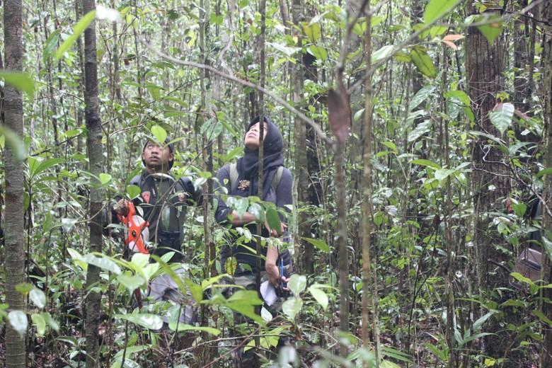 Pohon Ulin Kisah Siti Maimunah Hutan Adat Kutukan Taman Tebet