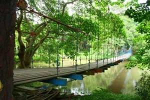 Trafelling Taman Hutan Wisata Punti Kayu Tebet Kota Administrasi Jakarta