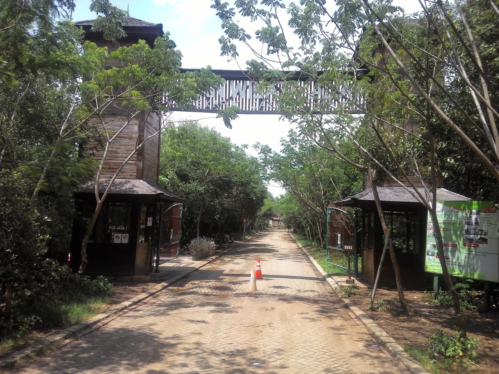 Wisata Alam Jakarta Tak Sepi Taman Hutan Mangrove Pik Tebet