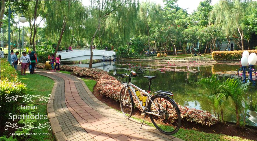 Gowes 5 Taman Sepat Dadap Merah Spathodea Tabebuya Tanjung Slide8
