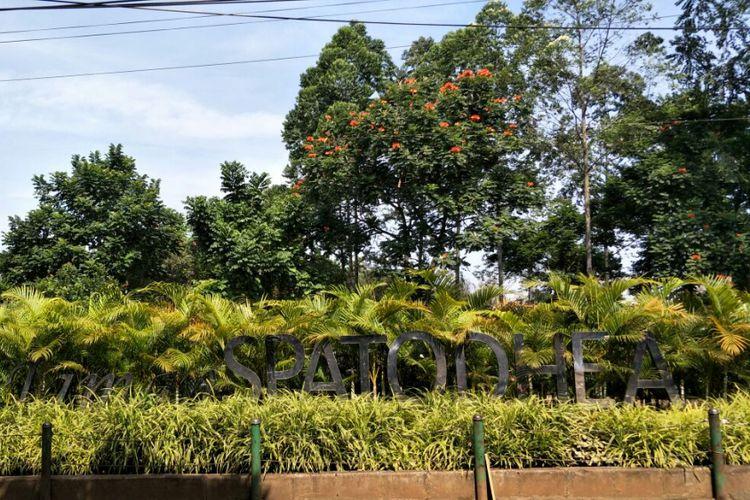 Menikmati Keindahan Taman Spathodea Jagakarsa Kompas Jalan Raya Kebagusan Jakarta