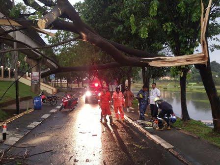 Hujan Deras Delapan Pohon Tmii Tumbang Info Mengguyur Ibukota Menyebabkan