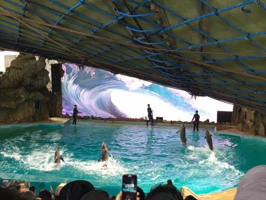 Dolphin Show Picture Ancol Ocean Dream Samudra Jakarta Kota Administrasi