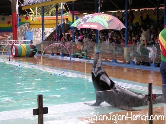 Gelanggang Samudra Ancol Sinema 4d Jalan Jajan Hemat Singa Laut