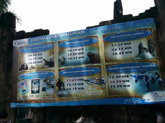 Jadwal Atraksi Gelanggang Samudera Ancol Oceam Dream Ocean Samudra Kota