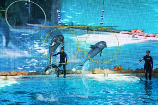 Jumpin Dolphins Picture Ancol Ocean Dream Samudra Jakarta Kota Administrasi