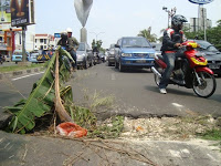 Metro Jakarta Utara Februari 2010 Mp Menanam Pohon Pisang Tengah