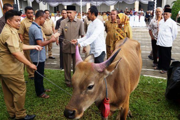 Presiden Serahkan Hewan Kurban Masjid Raya Al Fatah Ambon Kota