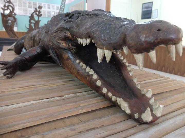 Menengok Buaya Tete Raksasa Bersarang Museum Siwalima Ambon Pic Afif