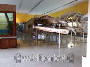 Museum Kota Ambon Sewa Mobil Pusat Informasi Kerangka Ikan Paus