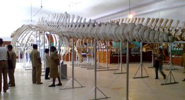 Museum Siwa Lima Ambon Maluku Flickr Kota